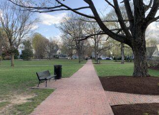 Town Common trees