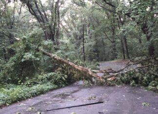 Glen Road tree down