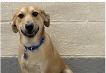 Baypath adoptable animal-Milo