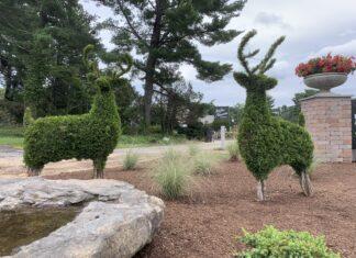 Weston Nurseries deer bushes