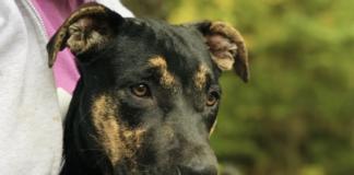Baypath Adoptable Animal-Splish